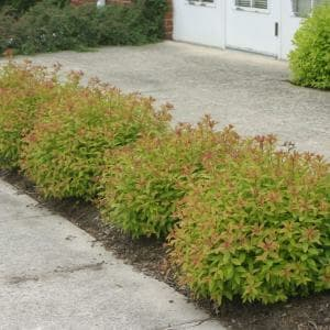 Protect Your Bushes